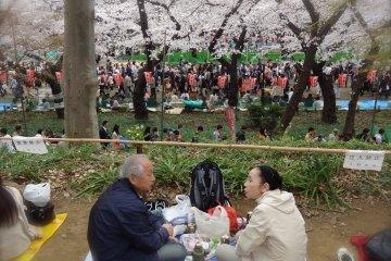<p>A cute Japanese couple sharing a hanami experience at Ueno Park</p>