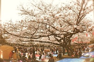 A glimpse of reserved spaces for visitors who are taking part in the hanami experience at Ueno Park
