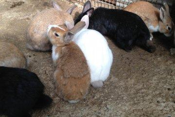 Conejos para acariciar.
