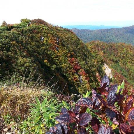 Finding Shirakami Sanchi