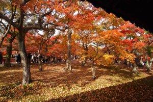 ทิวทัศน์จากสะพานTsutenkyouเมือมองไปยังฝั่งสวน