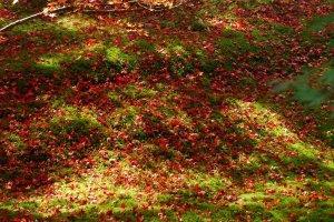 ใบไม้สีแดงดัดกับหญ้ามอสสีเขียว