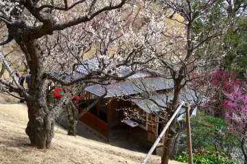 <p>Teahouse and the plum tree garden</p>