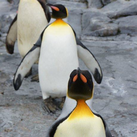 北海道:夏季的旭山動物園