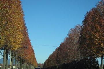 <p>ถนนสายหลักที่มุ่งสู่จาซ่า</p>