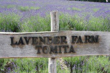Farm Tomita (Funaro) ในหน้าร้อน