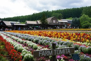 นี่คือทางเข้า Farm Tomita ที่นี่มีมากกว่าทุ่ง Lavender เขาจะปลูกดอกไม้หลากชนิดเพื่อระบายสีสันให้กับพื้นที่และเพื่อให้คนมาเที่ยวทุ่งดอกไม้ได้นานถึง 6 เดือน (จริงๆเปิดทั้งปีนะคะ แต่ช่วงดอกไม้บานจะประมาณ 6 เดือน)