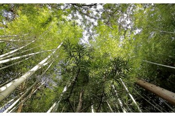 <p>Bamboo Forest in Nanzen-ji, Kyoto, Japan</p>