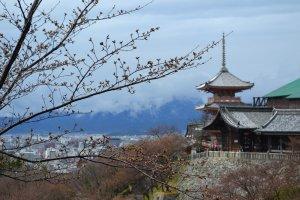 ก้านดอกซากุระที่มัวแต่หลับไหลในสายฝนไม่ยอมเบ่งบาน เจดีย์วัดคิโยมิสุ และเมืองเกียวโตในมุมสูง