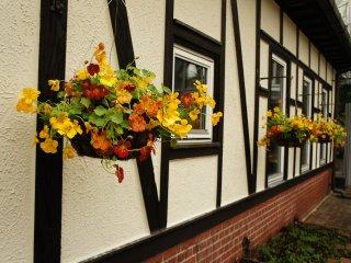 هناك الزهور الجميلة المعلقة على جدران البيوت الزجاجية بصراحة لا أتذكر كم من الوقت أمضيت بمشاهدتها في عطلة نهاية الاسبوع ، ربما الكثير .