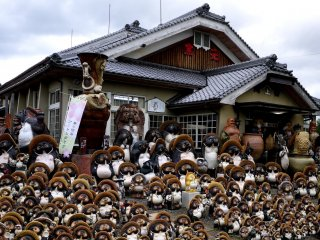 Hundreds of small tanuki statues