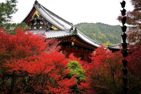 Chùa Bishamondo vào mùa thu