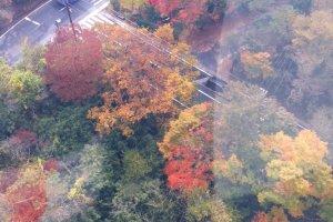 มุมมองใบไม้เปลี่ยนสีจาก กระเช้าไฟฟ้า Hakone Ropeway