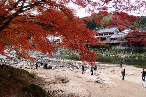 ทางเดินเลียบแม่น้ำกับใบไม้แดง