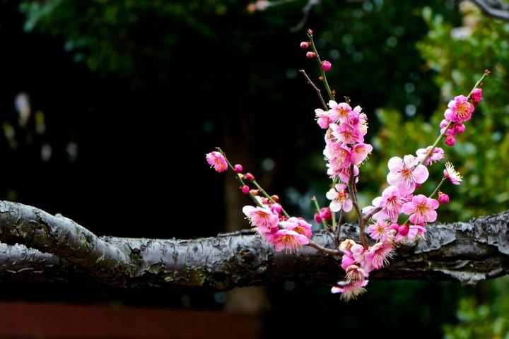 สวนดอกไม้มุโคจิมะ