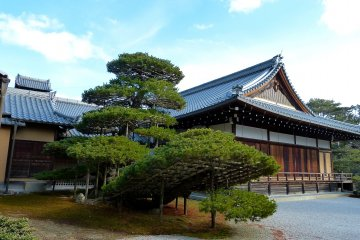 <p>Rikushu no Matsu (pine tree trimmed like a ship headed for the Land of the Pure)</p>