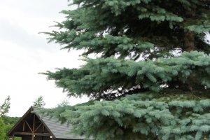 มีบริเวณให้เดินเล่น ซื้อของ ต้นสนกับกระท่อมไม้มันช่างทำให้รู้สึกเหมือนมาบ้านพักตากอากาศ