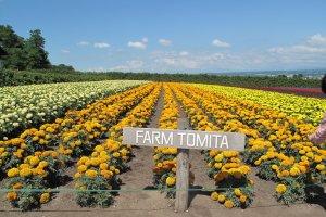 ฟาร์มดอกไม้โทมิตะ แห่งเกาะฮอกไกโด