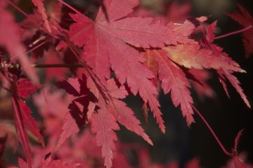 ฤดูใบไม้ร่วง ณ สวนเอ็นซูอิน