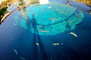 น้ำสีคราม มองเห็นปลาและก้นบ่อลึก 8 เมตร