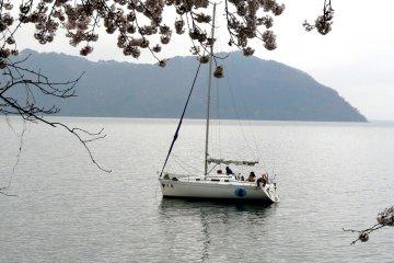 어떤 사람들은 배에서 벚꽃을 즐겼다