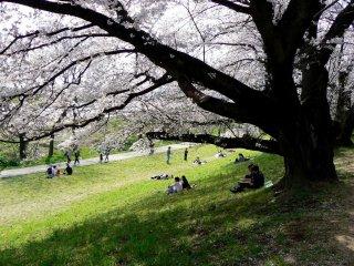 나무 밑 잔디밭에서 독서하기