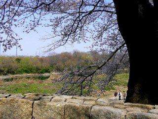 Bức tường đá và các bậc làm cảnh quan trở nên đẹp hơn