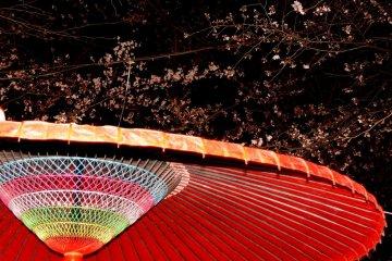 벚꽃 아래 화우산