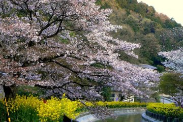 Spring at Biwako Canal in Kyoto