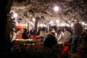 벚나무에 밝은 빛이 드리워져 있다