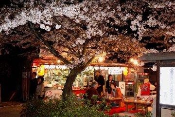 마루야마 공원의 봄