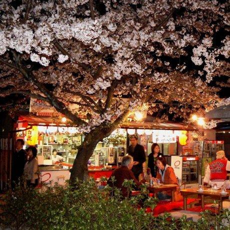 Spring at Maruyama Park