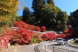 จุดชมวิว ใบไม้แดงกำลังบานสะพรั่ง