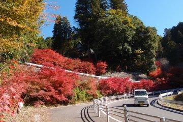 ตามหาซากุระในฤดูใบไม้ร่วงที่ Obara