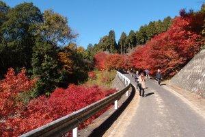 จุดชมวิวอีกเส้นทางนึง ใบไม้พร้อมใจกันแดงตลอดแนว