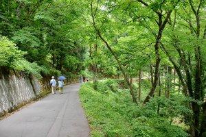 ความเขียวชอุ่มของต้นไม้สองข้างทางตอนเดินลงเนินเขาจากจุดชมวิว