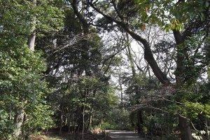 Những con đường uốn lượn qua hàng cây