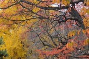 ทางเดินรอบปราสาทใบไม้เปลี่ยนสีกำลังสวย