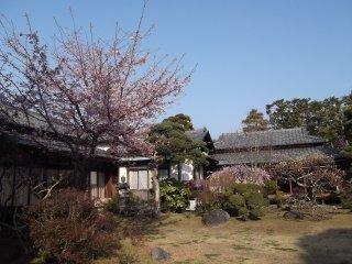 庭園の両脇には日本の伝統家屋が並ぶ