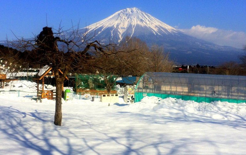 <p>The Asagiri Plateau, located at the foot of Mt. Fuji, is one of Japan&#39;s top &quot;dairylands.&quot;</p>