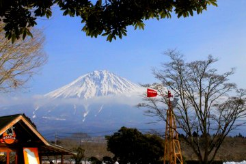 <p>Mt. Fuji stands majestic as it captures not just the farm visitors&#39; fancy, but the animals&#39; as well.</p>