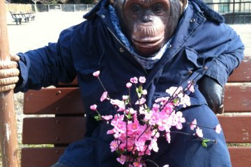 The photo monkey