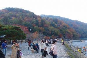 ใบไม้กำลังเปลี่ยนสีงดงาม
