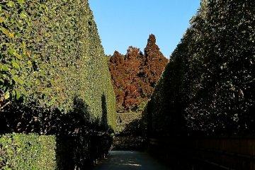 <p>Hedge-lined path leading to Ginkaku</p>