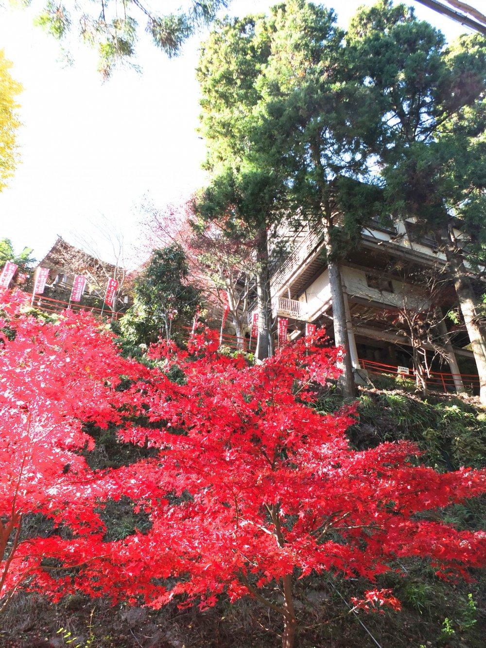 Looking up atOyamaTemple on a beautiful autumn day