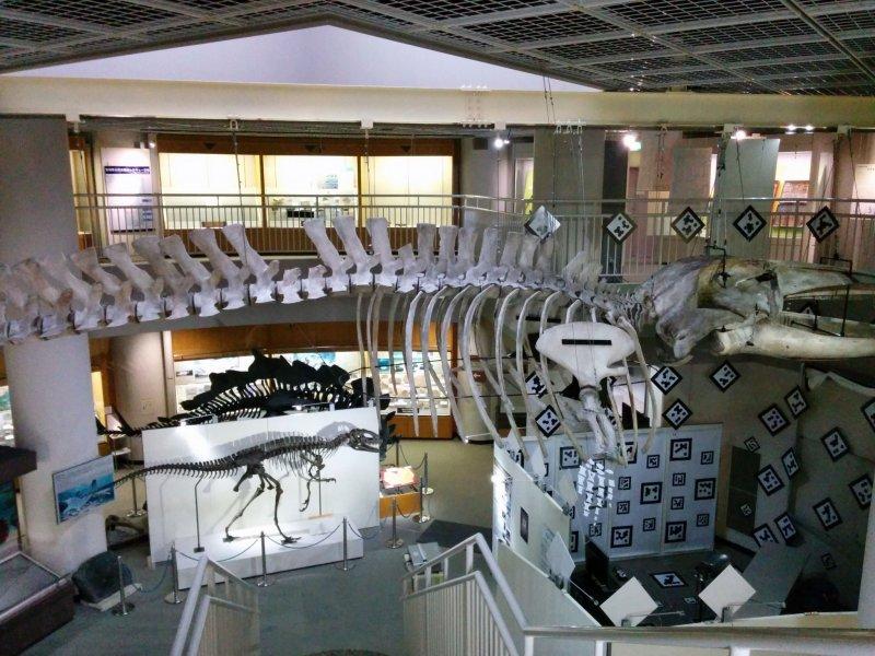 Museum of Natural History - Sendai, Miyagi - Japan Travel