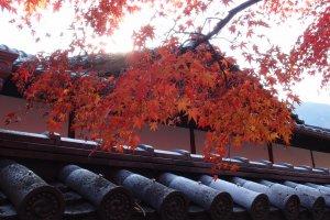 ใบไม้แดงไปทั่ววัด