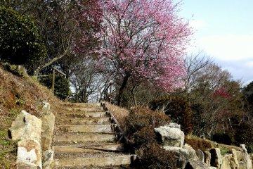 매실 과수원의 계단