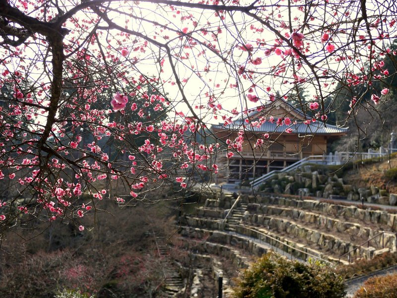 계단식 산비탈의 꼭대기에 있는 절 건물