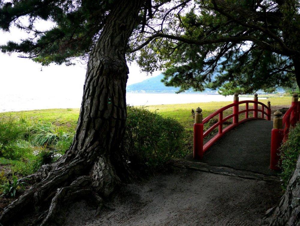 Cây cầu đỏ xinh xinh dưới một cây thông gần hồ nước